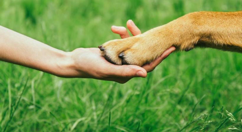 Le rôle des chiens de soutien émotionnel est de venir en aide aux victimes de traumatismes d'homicides, d'accidents. 123 RF