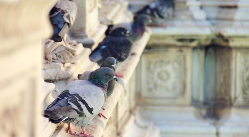 Au cœur de la ville, le Palazzo Pubblico, qui domine la Piazza del Campo. PIXABAY