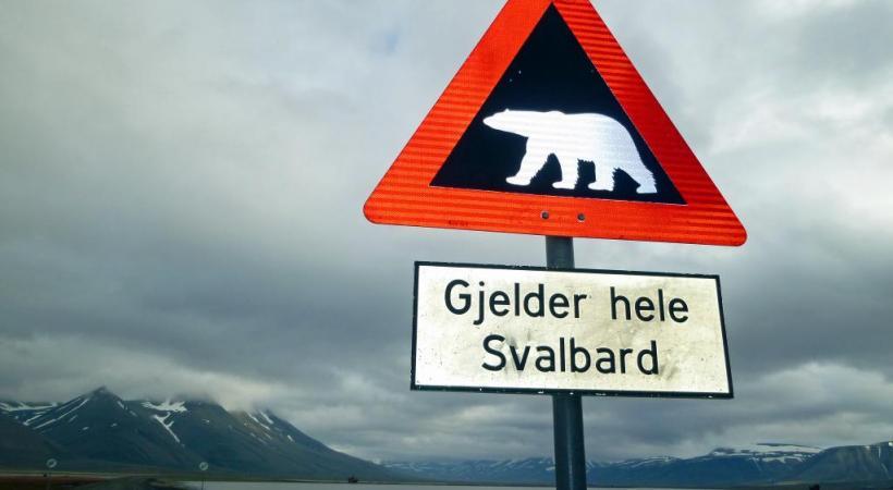 La rencontre avec l'ours blanc justifie un voyage dans l'archipel du Svalbard, dont le Spitzberg est l'île principale.