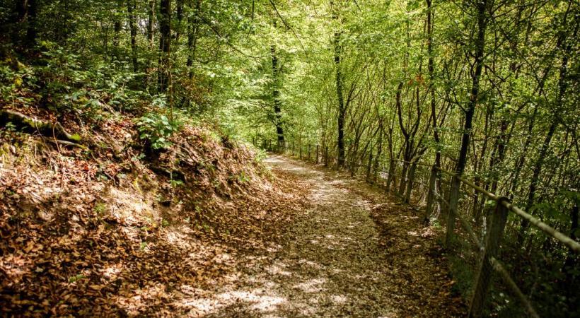 La Ville a accepté de remettre en état le chemin forestier déjà emprunté par les écoliers. MISSON