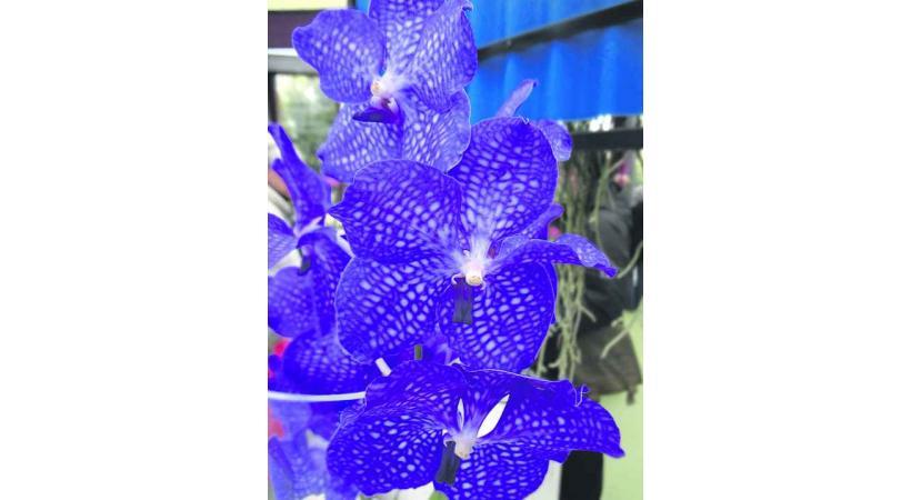 La thématique tropicale fait la part belle aux orchidées