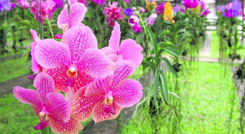 A chaque édition, les floralies révèlent de nouvelles espèces