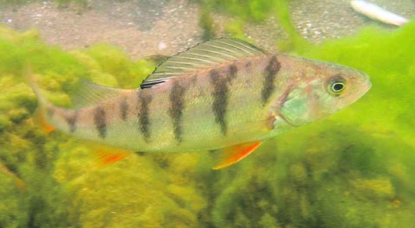Le sonar multiplie les chances de dénicher les bancs de poissons.